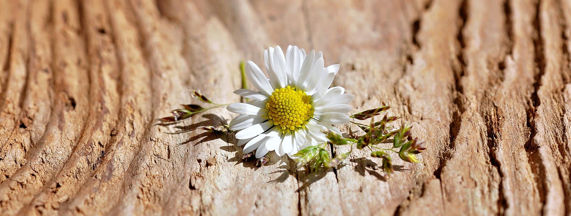 flower-747367_1920
